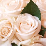 Background with roses 01_7296TЕ5472