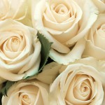 Background with roses 02_7296TЕ5472