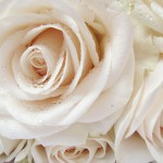 Background with roses 04_6528TЕ4896