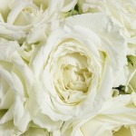 Background with roses 05_8360TЕ6120