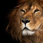 King Lion4_5102TЕ3400