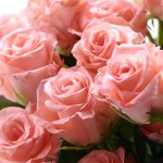 Luxurious bouquet of roses 01_5696TЕ8576