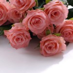 Luxurious bouquet of roses 03_8576TЕ5696