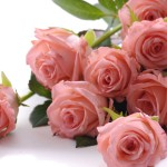 Luxurious bouquet of roses 04_8576TЕ5696