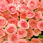 Luxurious bouquet of roses 05_6526TЕ5696