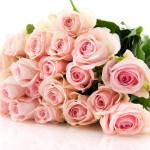 Bouquet pink roses in bunch isolated over white