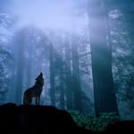 wolf20_1024x768