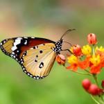 Butterflies_0052063_6912TЕ4608