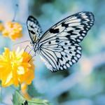 Butterflies_0238512_5382TЕ5448