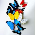 Butterflies_0244081_6906TЕ8522