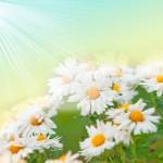 flower_4288x3564_4288TЕ3564