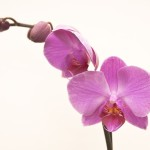 Flowers_0028_6144TЕ4081